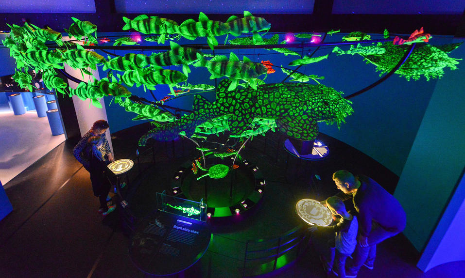 Dive Into 'Unseen Oceans' And Explore Glow-In-The-Dark Fish At This Immersive Exhibit