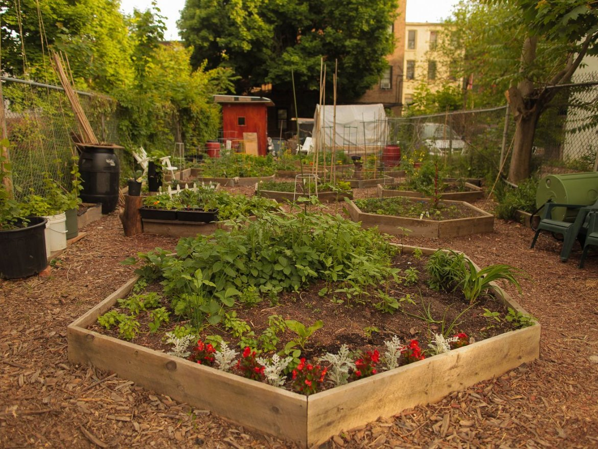 Community Gardens As Classrooms, Love on the Gowanus Canal, and Other News